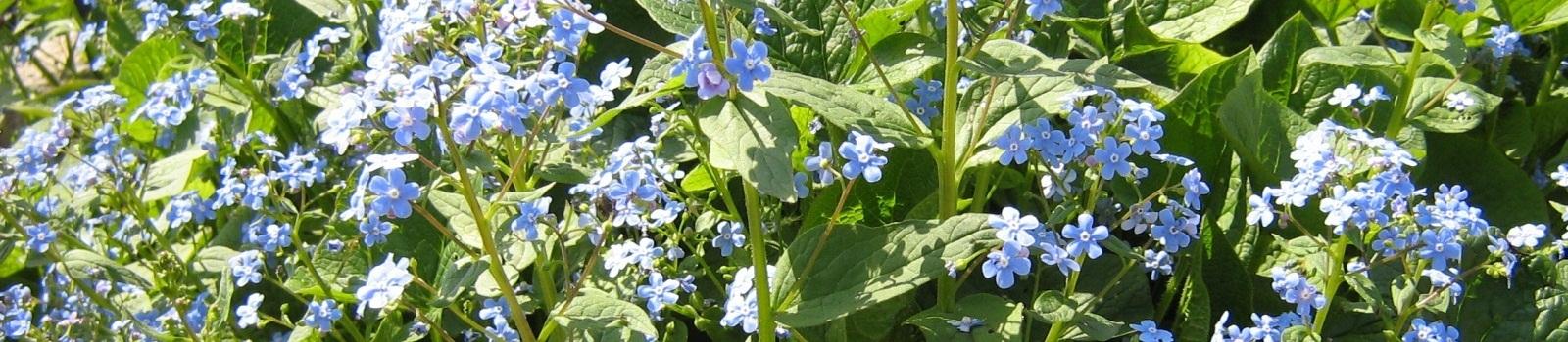 Многолетние цветы для сада и дачи